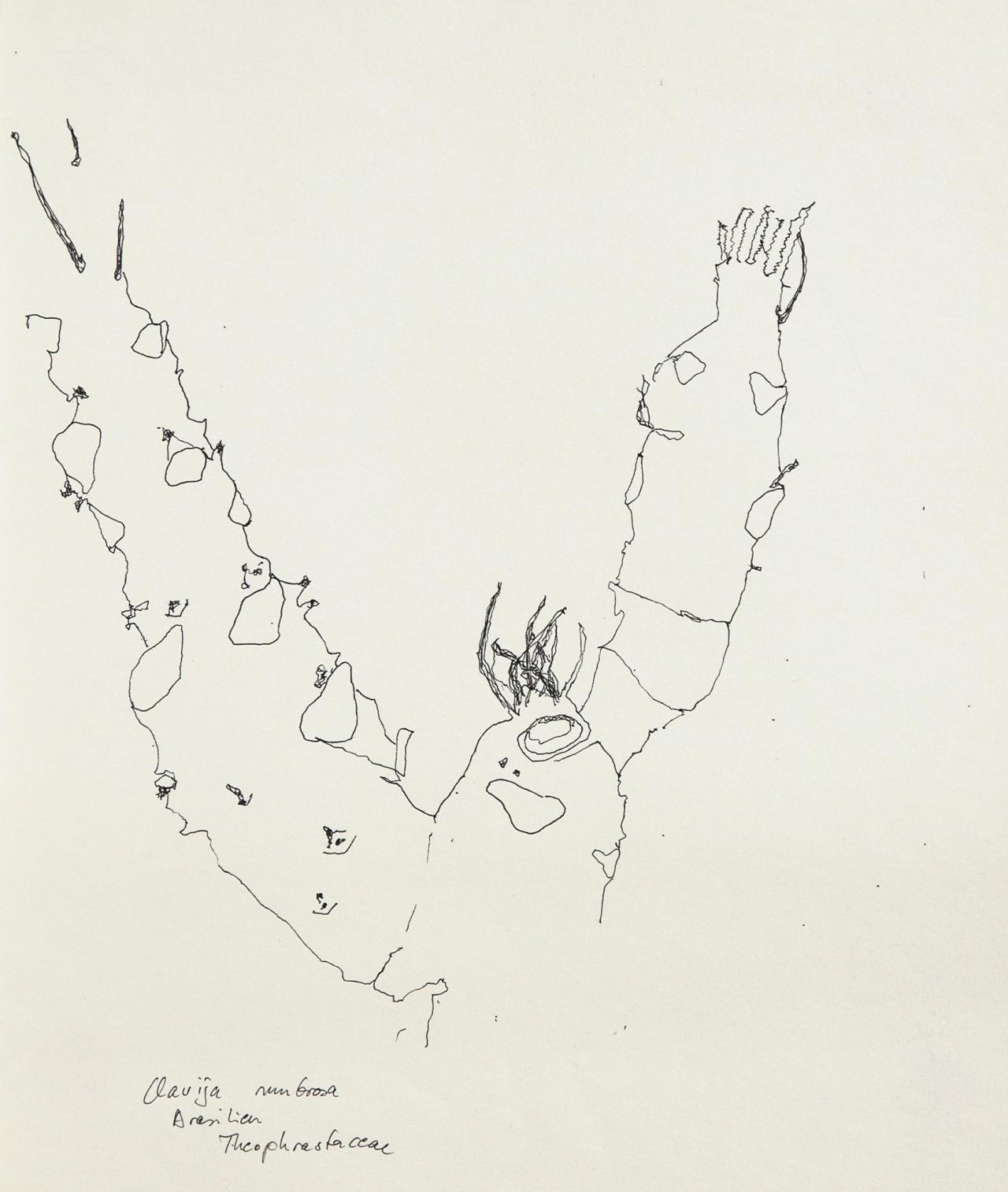 Evelyn Werhahn Zeichnungen